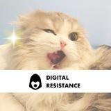 Бляцкие коты