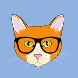Кот-юрист
