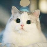 КотяКот