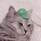 Картинки с тупыми котами